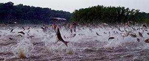 Casey, Great Lakes Senators Urge Action on Asian Carp Threat